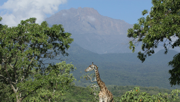 Arusha Nationalpark - Mount Meru