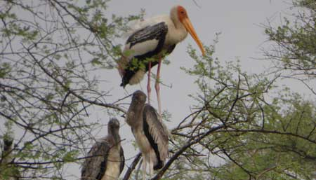 Keoladeo Nationalpark - UNESCO Welterbe